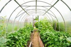 Le plastique a couvert la serre chaude d'horticulture Photos libres de droits