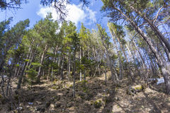 Le plateau du Lago-Naki Caucase Images stock