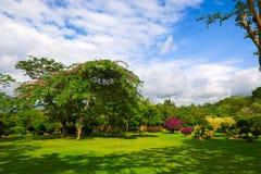Le plein des arbres de fleurs Photo stock