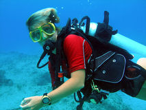 le plongeur de piqué apprécie le scaphandre ensoleillé Photo libre de droits