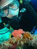 Le plongeur examine des oeufs de Nudi Photo stock