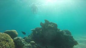 Le plongeur nage au-dessus d'une lumière de récif coralien au soleil banque de vidéos