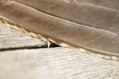 Le plumage est un grand plan rapproché de grouse Photos libres de droits