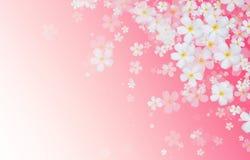 Le Plumeria blanc ou le Frangipani fleurit sur le dos rose de couleur de gradient illustration de vecteur