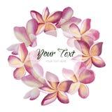 Le plumeria d'aquarelle de vintage de vecteur fleurit la carte de voeux Fond floral tropical Image libre de droits