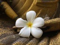 Le Plumeria de Hite a mis en main de la statue d'or, fleur blanche photographie stock