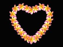 Le Plumeria fleurit le fond de noir d'amour de forme Photo stock