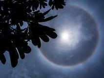 Le Plumeria part devant une silhouette noire du halo i de The Sun Photo stock