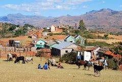 Le plus grand marché de zébu dans Ambalavao, Madagascar images libres de droits
