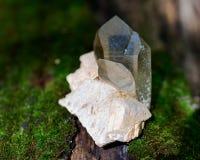 Le point citrin de quartz de cathédrale du Brésil s'est niché dans la matrice sur la mousse, le bryophyta et l'écorce, rhytidome  image libre de droits