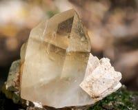 Le point citrin de quartz de cathédrale du Brésil s'est niché dans la matrice sur la mousse, le bryophyta et l'écorce, rhytidome  photo libre de droits