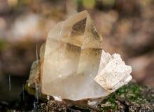 Le point citrin de quartz de cathédrale du Brésil s'est niché dans la matrice sur la mousse, le bryophyta et l'écorce, rhytidome  image stock