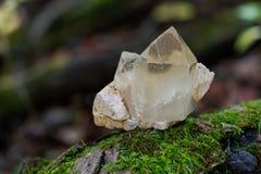 Le point citrin de quartz de cathédrale du Brésil s'est niché dans la matrice sur la mousse, le bryophyta et l'écorce, rhytidome  photographie stock