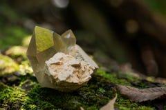Le point citrin de quartz de cathédrale du Brésil s'est niché dans la matrice sur la mousse, le bryophyta et l'écorce, rhytidome  images libres de droits