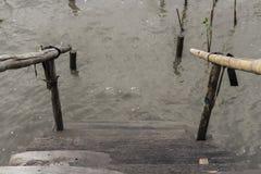 Le point de départ, le reboisement, palétuvier, à, se protègent, catastrophe naturelle photographie stock libre de droits