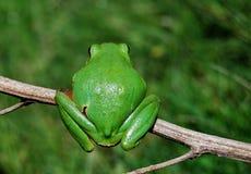 Le point de vue de la grenouille Image libre de droits