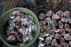 Le poisson-chat de mer est des espèces de poisson-chat de mer connues sous le nom de manyung en Indonésie et arahan aux Philippin Images libres de droits