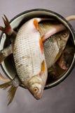 Le poisson cru est dans la vaisselle ferreuse Photos stock