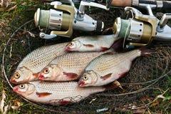Le poisson d'eau douce contagieux et les cannes à pêche avec la pêche tournoient Photographie stock libre de droits