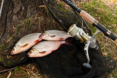 Le poisson d'eau douce contagieux et les cannes à pêche avec la pêche tournoient Photos stock