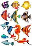 Le poisson de kit d'illustration est isolé Photos libres de droits