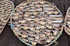Le poisson de mer sont séchés au soleil images libres de droits