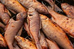 Le poisson de rivière se situe dans le fumoir, qui se tient sur l'herbe photographie stock libre de droits
