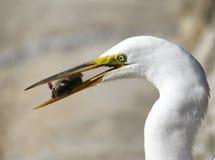 Le poisson est-il frais ? Photo libre de droits