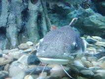 Le poisson est os pressé par poissons trouvé dans des caractéristiques d'eau douce et de mer photographie stock libre de droits