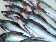 Le poisson frais dans le marché ou le supermarché de produits frais a refroidi des poissons frais image stock