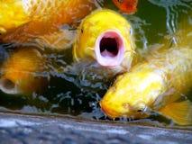 Le poisson indique le numéro Images libres de droits