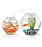 le poisson saute Photos libres de droits