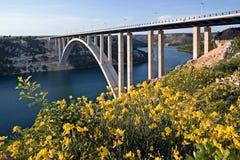 Pont de Krka derrière les fleurs de balai Photos stock
