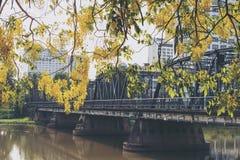Le pont avec la nature jaune Image libre de droits