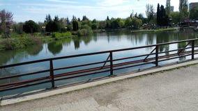 Le pont de lac plante la beauté en bois d'arbres de l'eau Photos stock