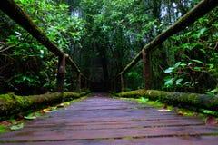Le pont en bois dedans à la forêt tropicale Photo libre de droits