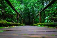 Le pont en bois dedans à la forêt tropicale Images stock
