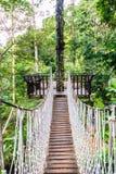 le pont sur le regard élevé d'arbre autour de la vue supérieure de forêt Photographie stock libre de droits