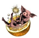 Le porc de sourire gai de Noël avec le feu du Bengale dans ses mensonges de patte dans la moitié d'une orange et des bulles volen illustration libre de droits