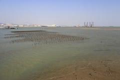 Le Porphyra met en place au bord de la mer de l'île de xiaodeng, porcelaine Photographie stock