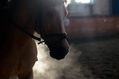 Le portrait de cheval exhalent dans le manege photo stock