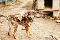 Le portrait de chien Photographie stock