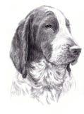 Le portrait du chien Photographie stock