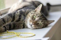 Le portrait du marbre mignon a barré le chat sur le rebord de fenêtre, animal simple, contact visuel, jouet jaune de chat de cord image stock