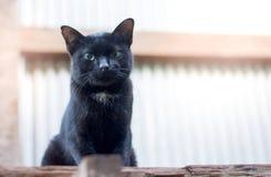 Le portrait du vieux chat noir avec les yeux verts se reposent et regardant l'appareil-photo Photo libre de droits
