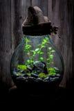 Le pot étonnant avec la forêt vivante, sauvent l'idée de la terre Photo libre de droits