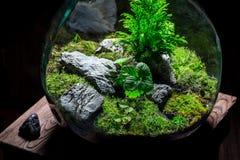 Le pot étonnant avec le morceau de forêt, sauvent l'idée de la terre Photographie stock libre de droits