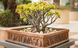 Le pot de fleur marqué avec des lettres avec le portomaso contiennent un petit, vert arbre à l'intérieur malte photos libres de droits