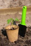 Le pot de tourbe avec la jeune usine au sol Images stock