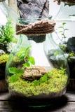 Le pot merveilleux avec la forêt vivante, sauvent l'idée de la terre Photos stock